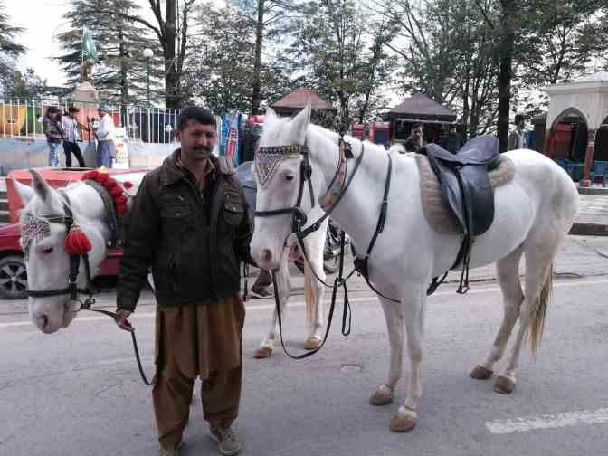Pferde Murree